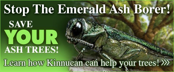 emerald ash borer treatment and emerald ash borer control for landscaping