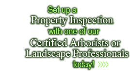 Set-up a property inspection with one of our certified arborists today
