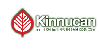 Kinnucan Logo